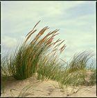 Seaside XVIII