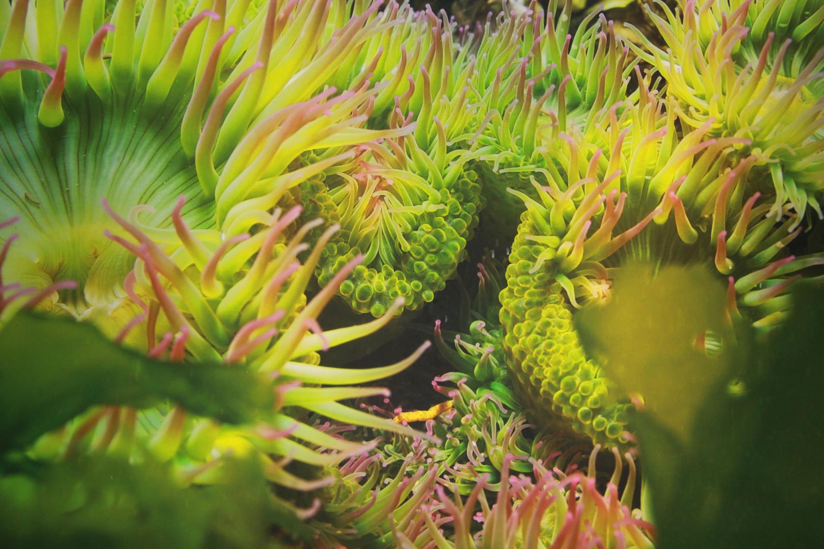 Seattle Aquarium I