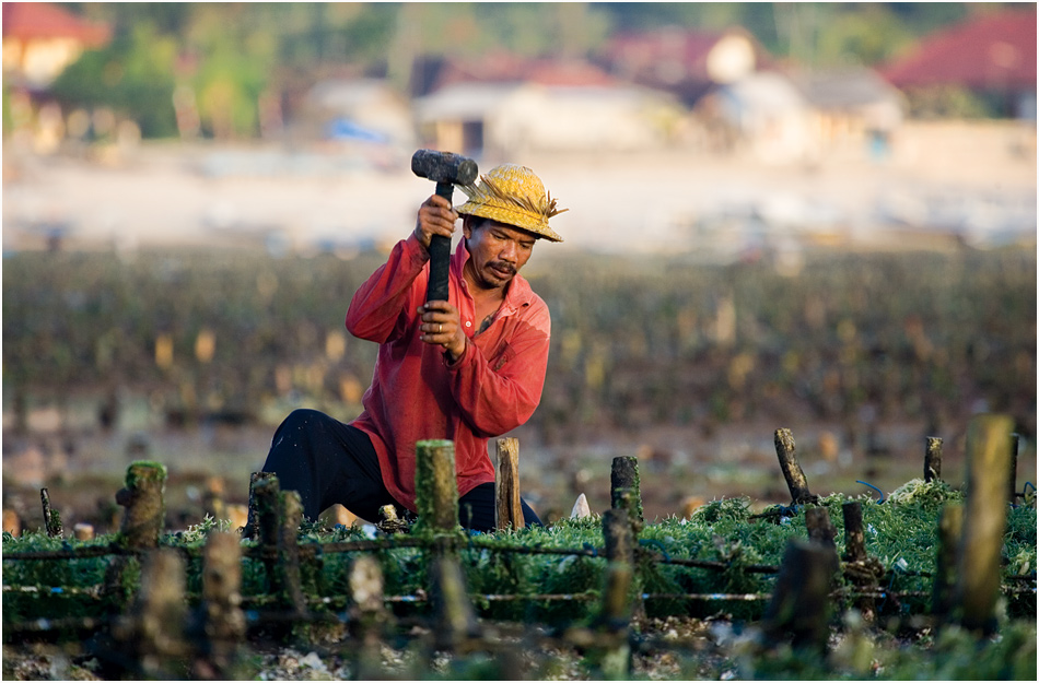 seaweed farmer