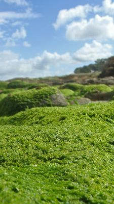 Seaweed Valley