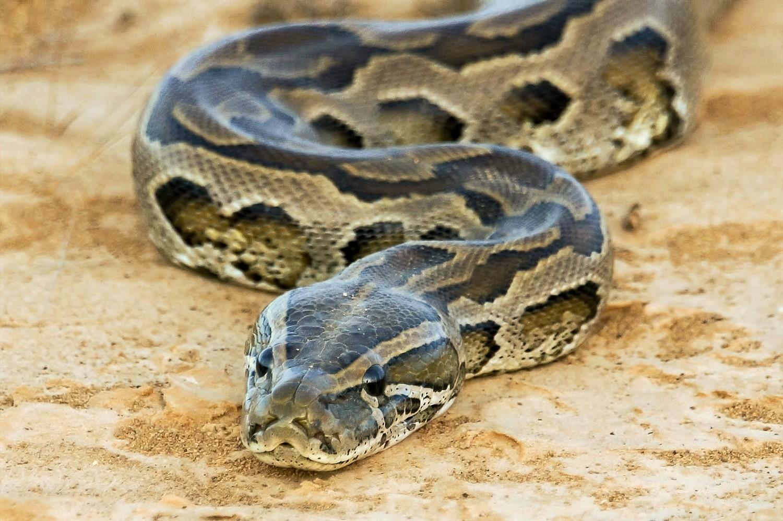 Seba-Python