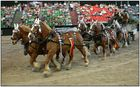 Sechs Pferdestärken in Aktion