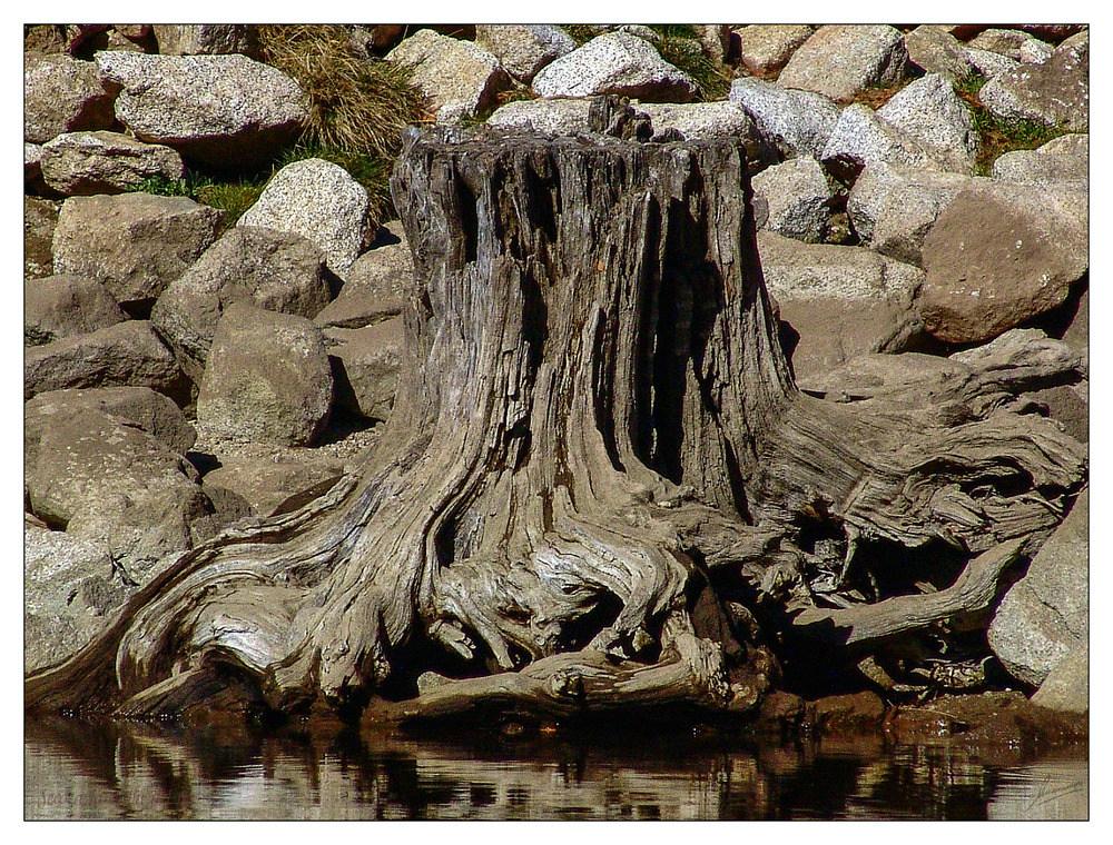 Seco a la orilla del rio