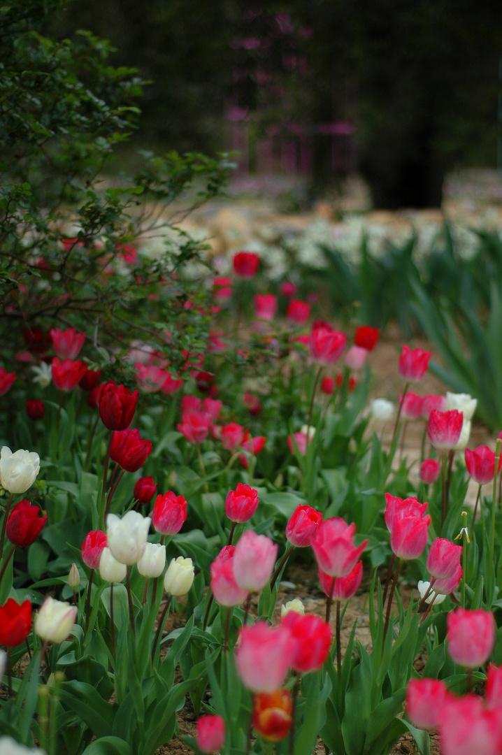 Secret gardens I