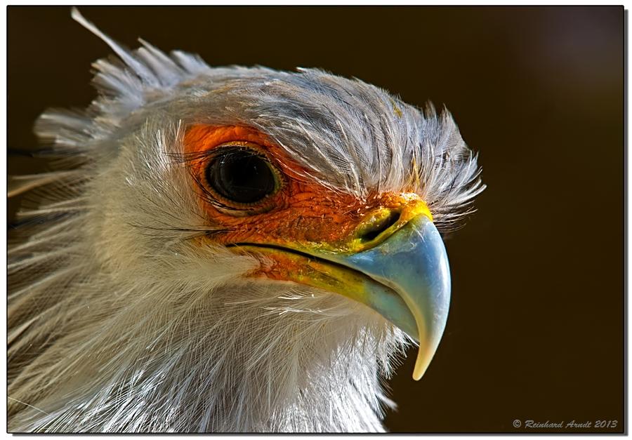 Secretary Bird (2)