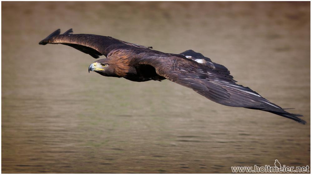 """""""See"""" - Adler ;)"""