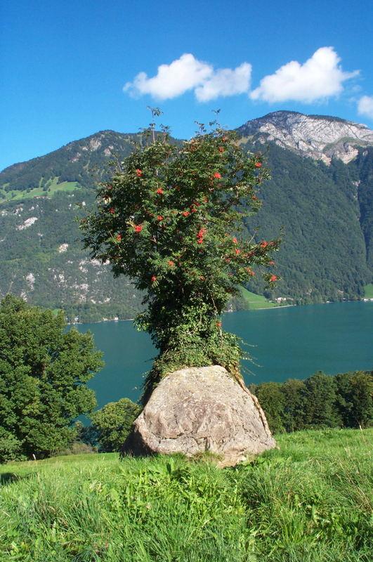 See, Berg, Stein, Baum überlebt