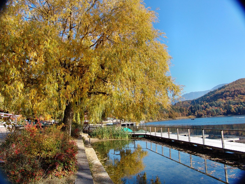 See Herbst
