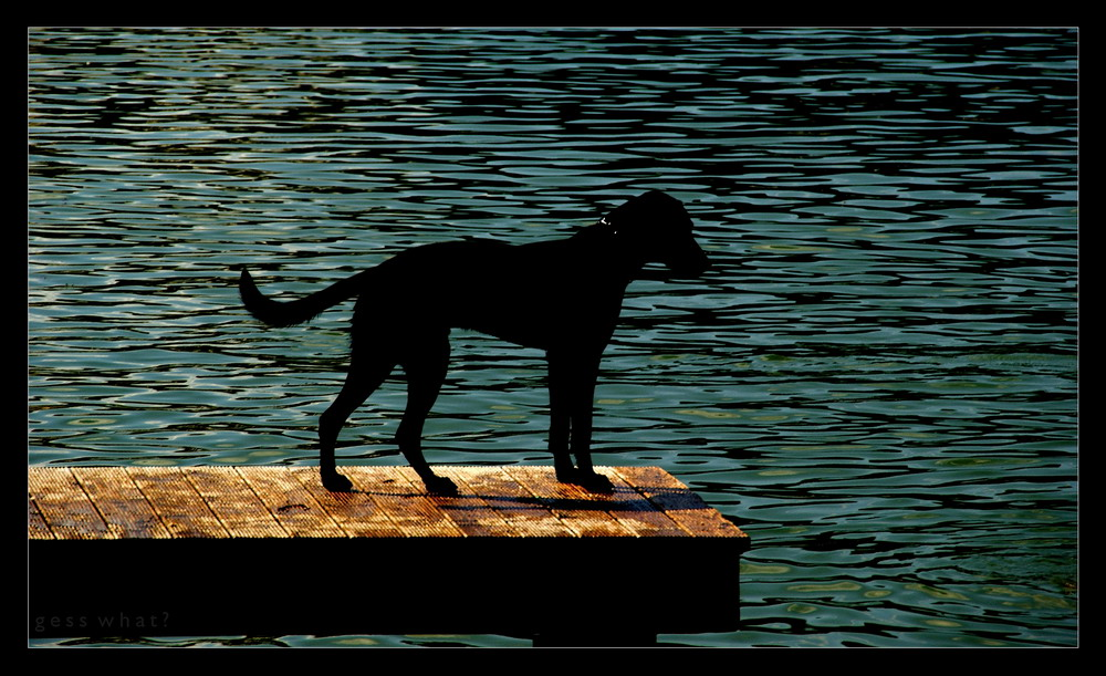 See / Hund