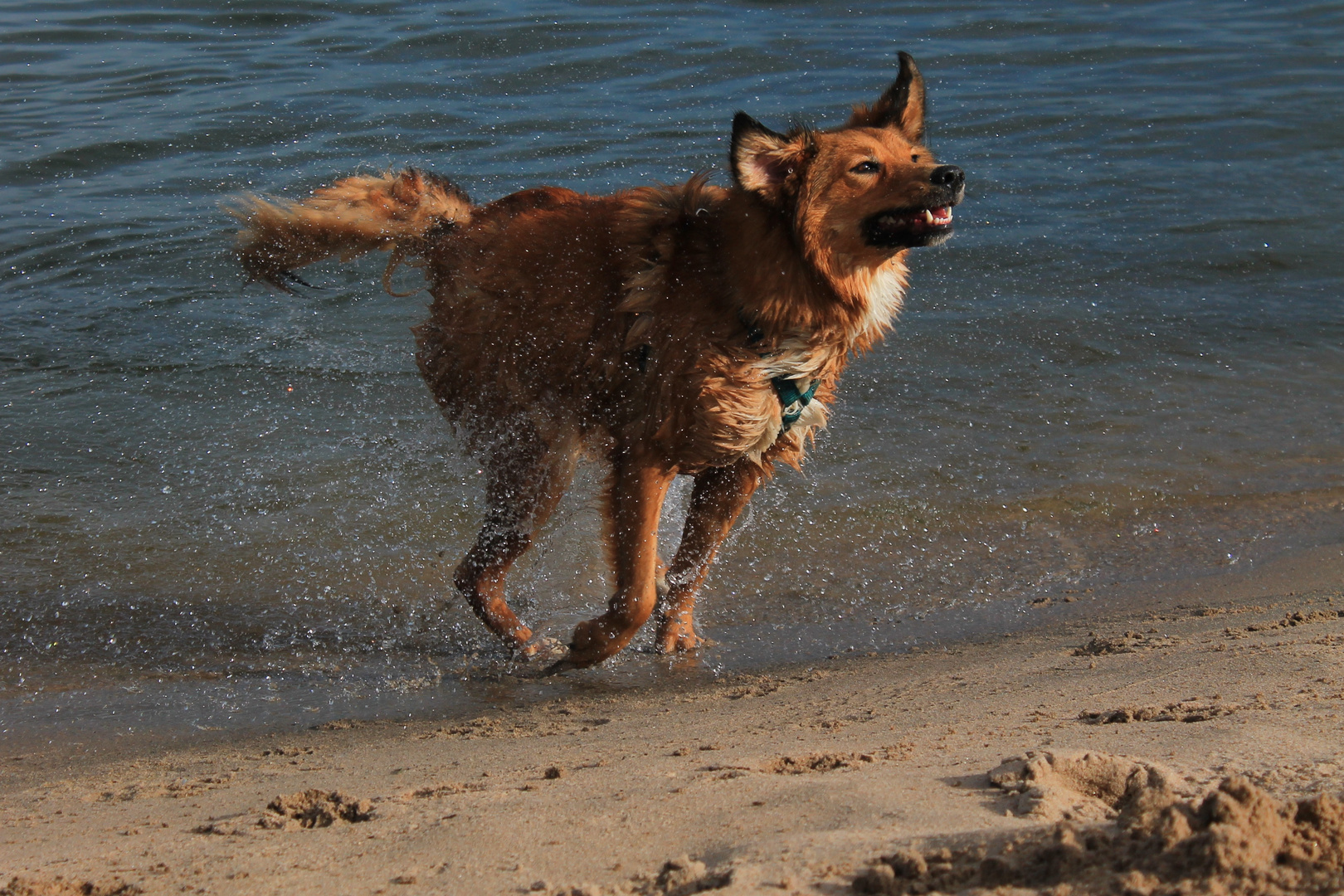 (See-)Hund