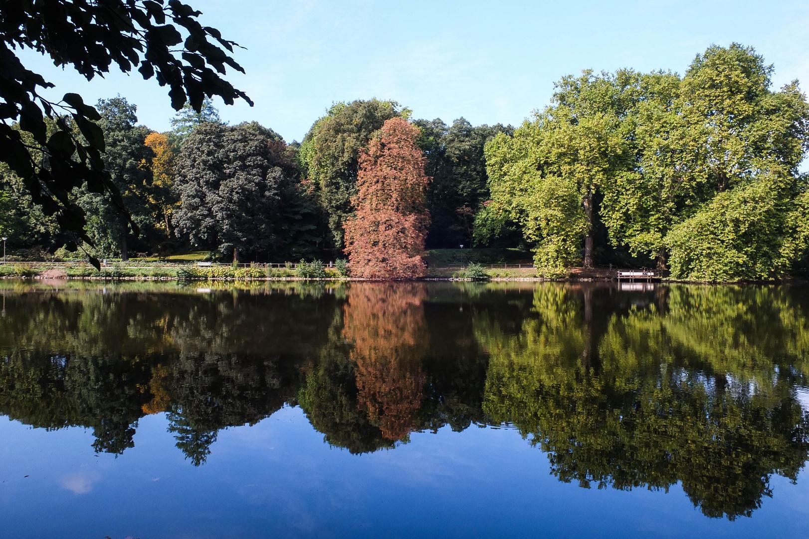See im Rombergpark Dortmund