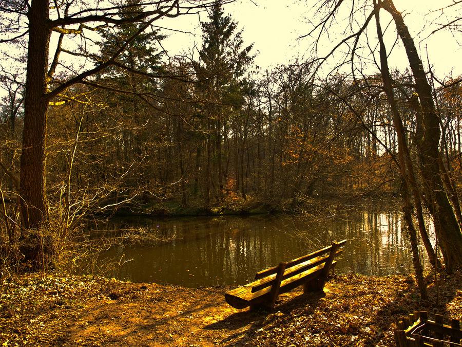 See in Stadtwald FFM