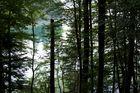 See und Wald (Tegernsee)