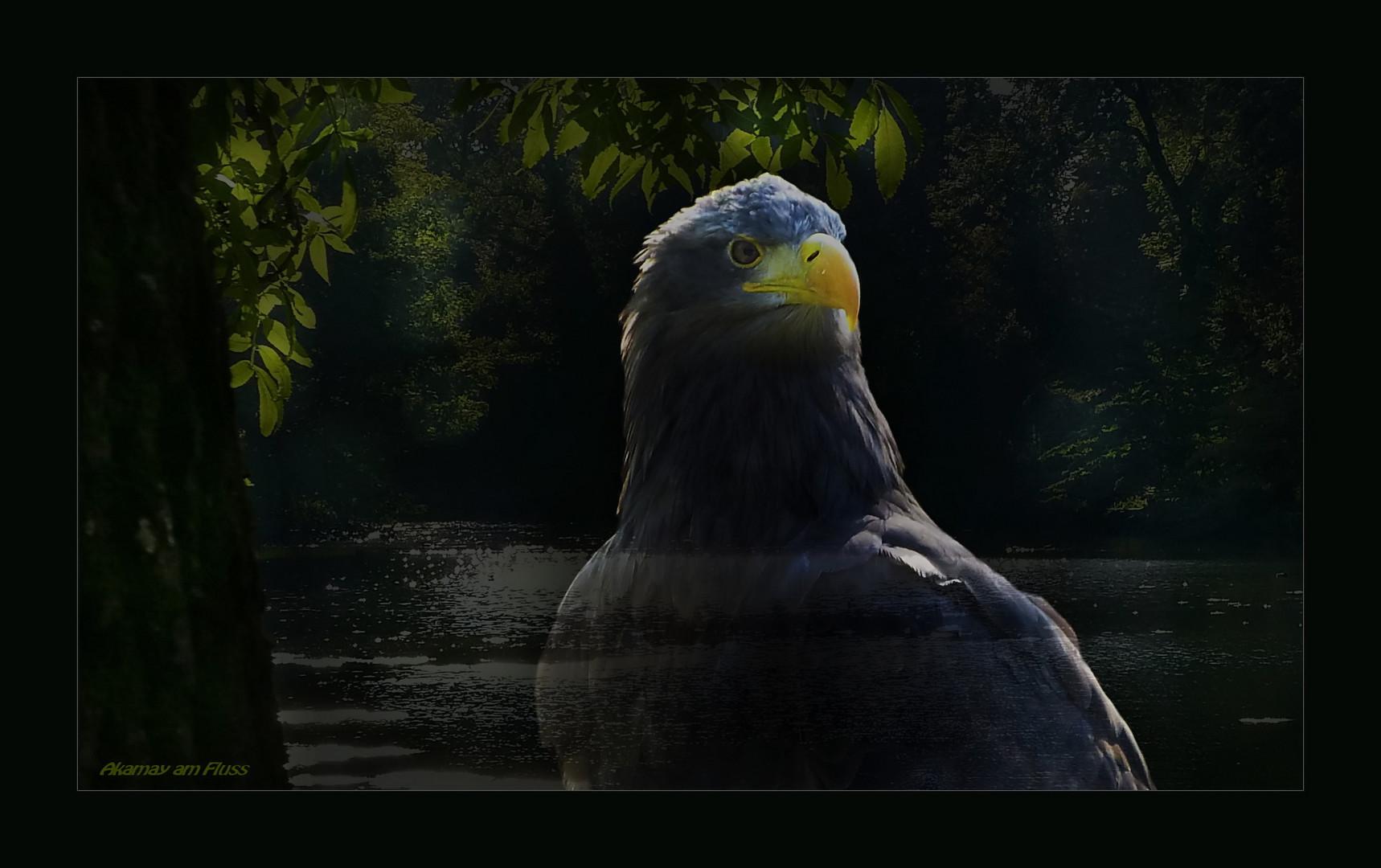 Seeadler im Visier - Teil 1 - Fantasy