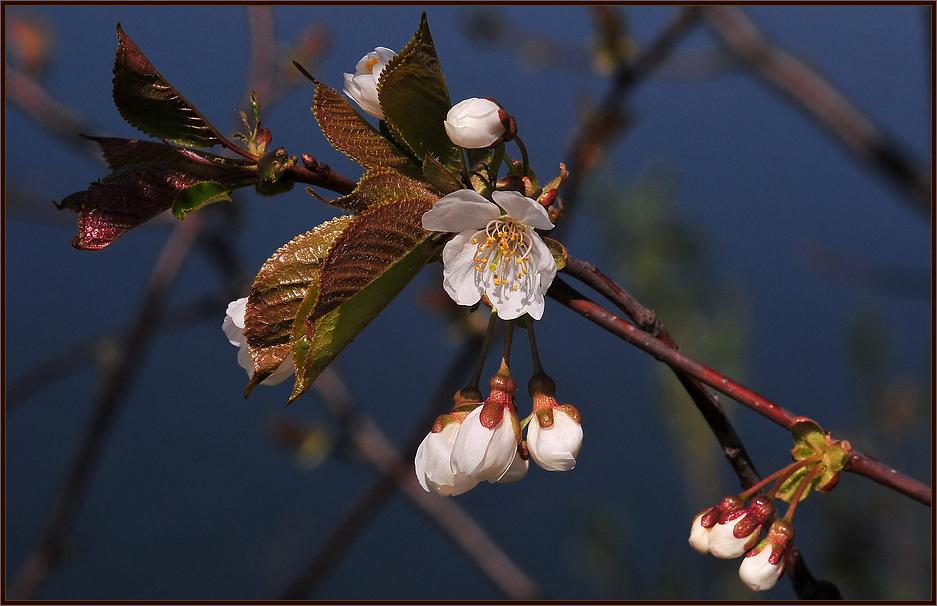 Seeblüten !