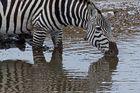 Seebra im Ngorongoro