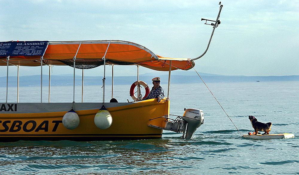 Seefahrerhund