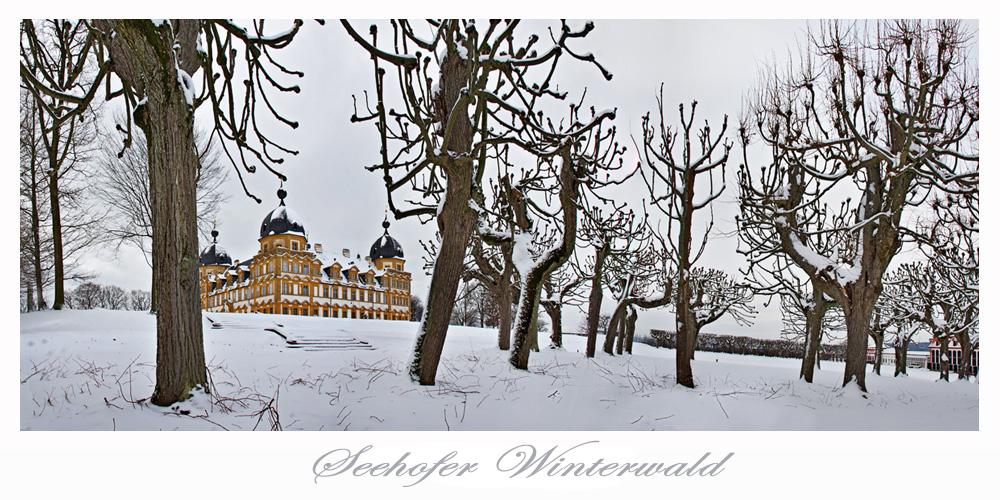 Seehofer Winterwald