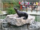 Seehund in Emmen