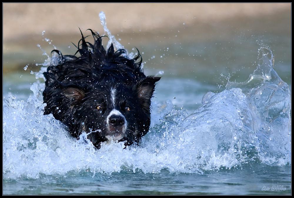 Seehund Luke