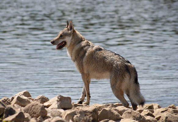 Seehund oder Seewolf ?