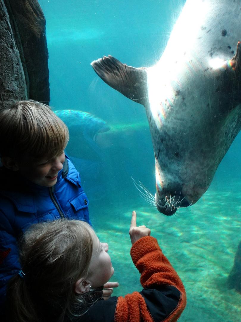 Seehundflüsterer