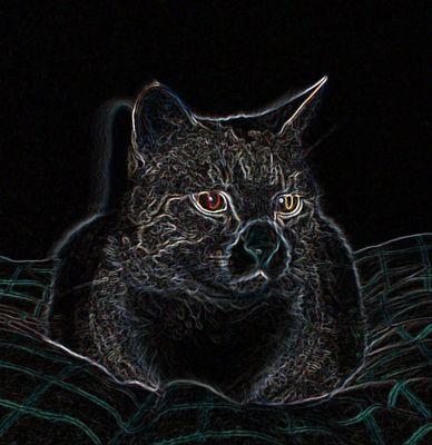 Seele einer Katze   Ruhe
