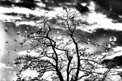 Seelenbild # 0176-0174