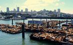 Seelöwen an der Pier 39 von Stefan Stadelmann