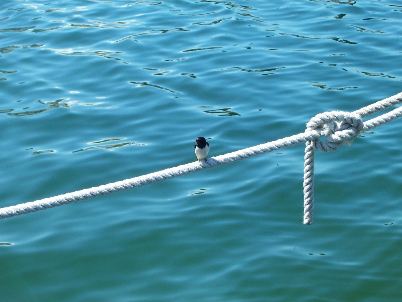 Seemannsgarn auf Seemansknoten