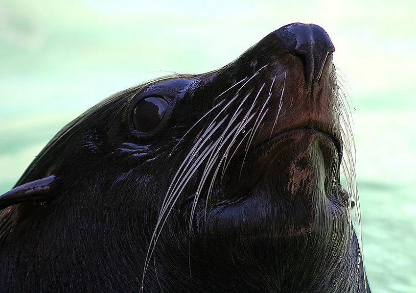 Seemannsgarn vom Seebär
