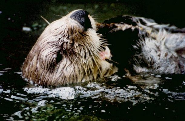 seeotters lunch