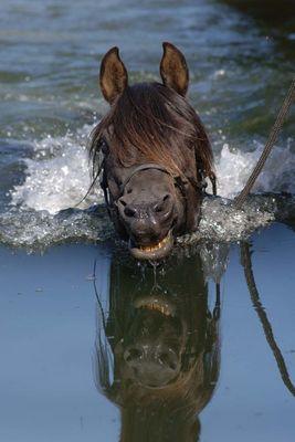 Seepferdchen - männlich ;o) by www.RamonaDuenisch.de