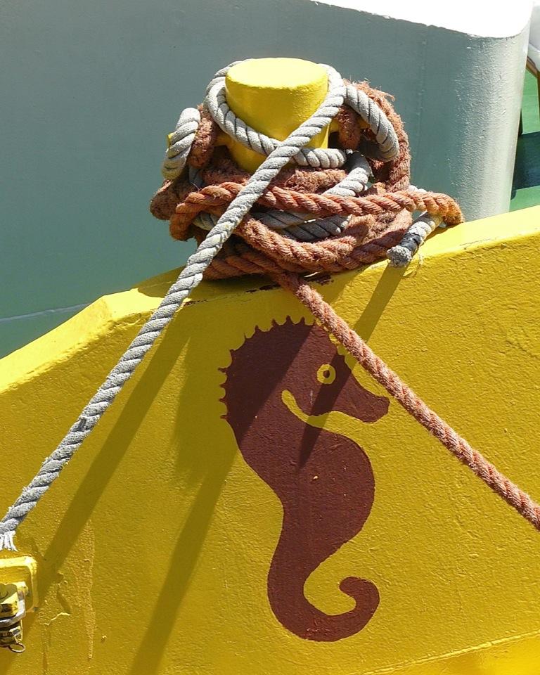 Seepferdechen geht vor Anker