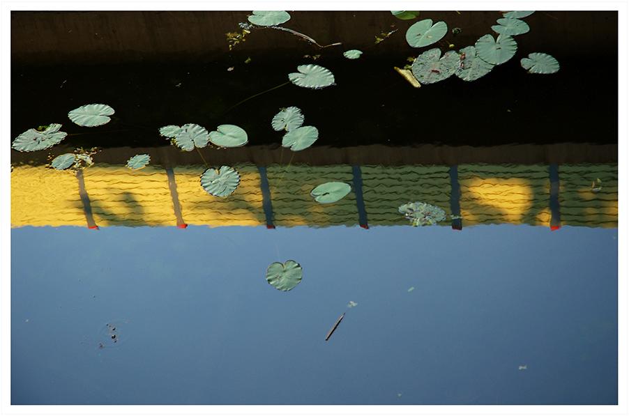 Seerosenbrückenspiegelung