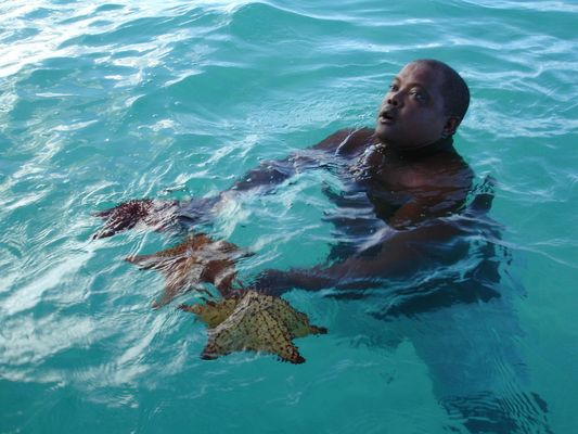 Seesterne in der Karibik