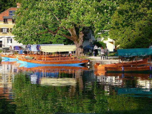 Seeufer Bleder See - Slowenien