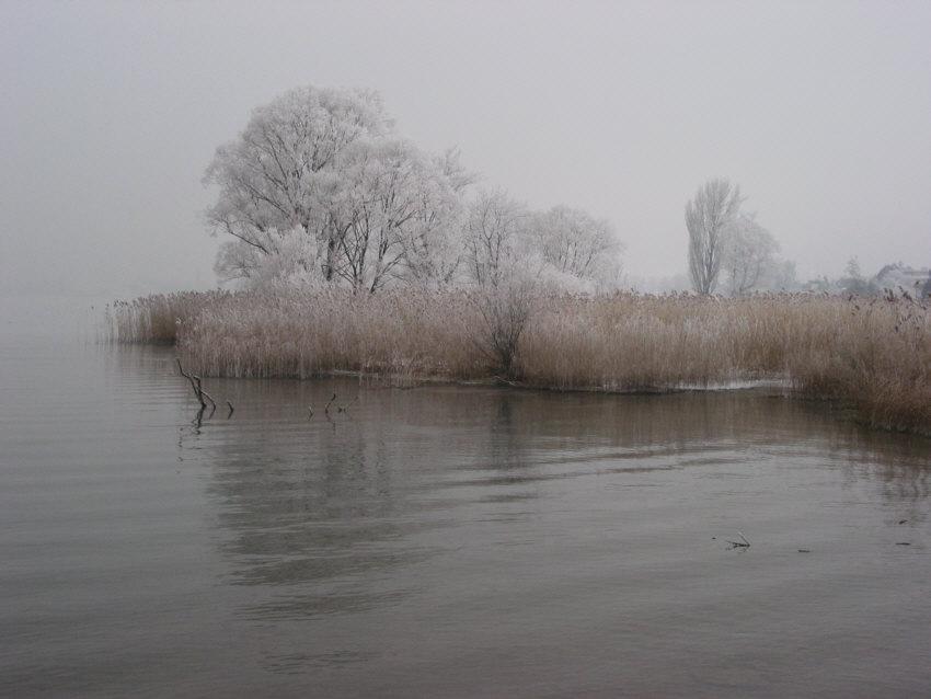 Seeufer im Nebel
