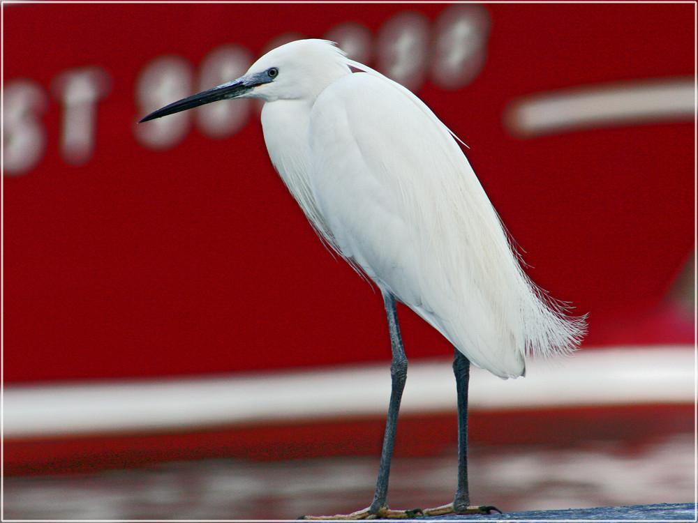 Seevogel