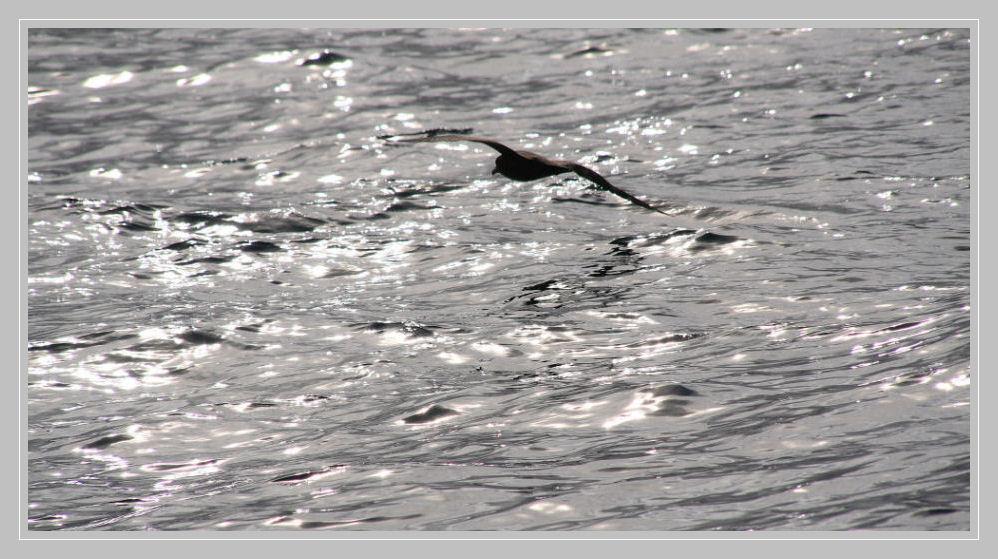 Seevogel neu