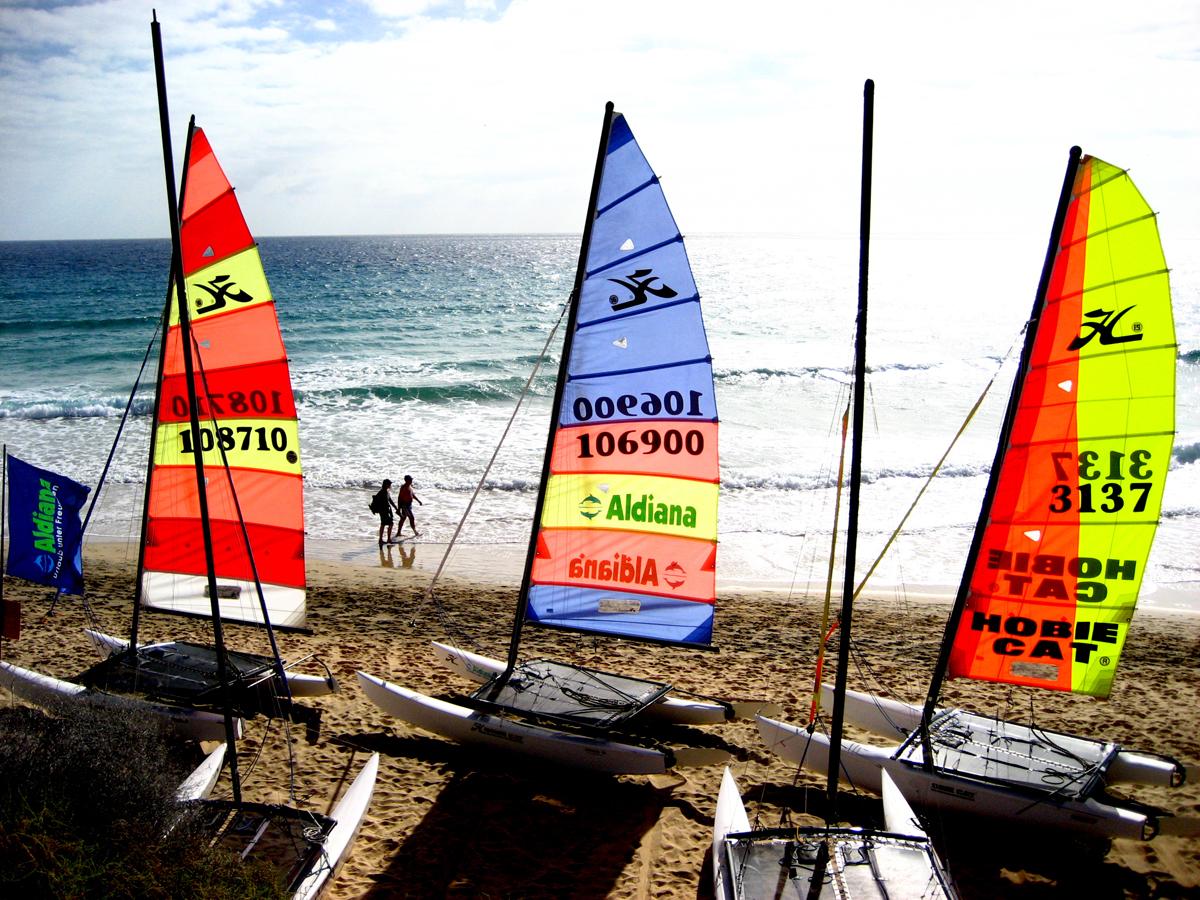 Segel am Strand von Fuerteventura