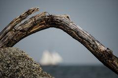 Segel am Wind