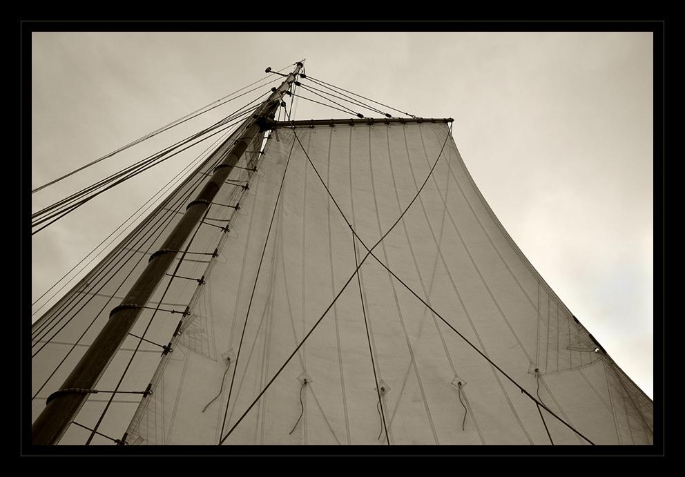 Segel im Wind III