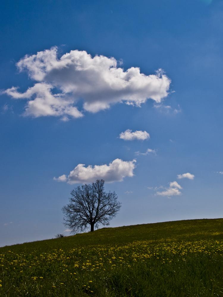 Segnali di Primavera