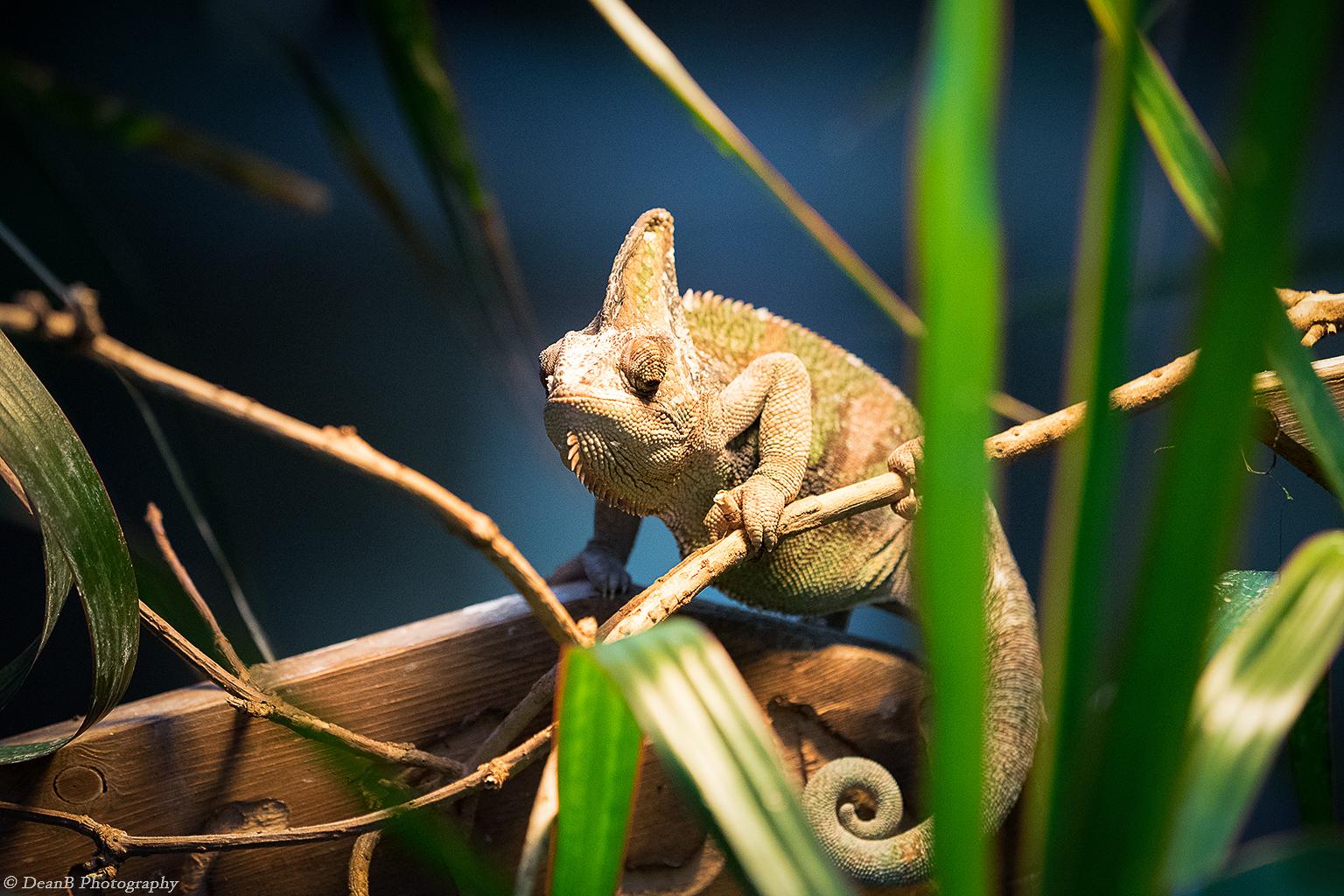 sehe ich nicht sch n aus foto bild tiere zoo wildpark falknerei amphibien reptilien. Black Bedroom Furniture Sets. Home Design Ideas