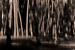 Sehe momentan den Wald...