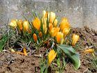 Sehensucht nach Frühling!