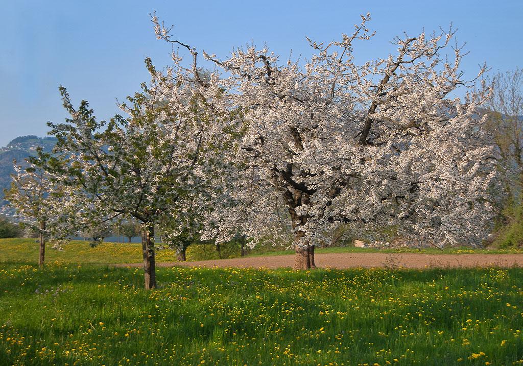 Sehnsucht nach dem Frühling