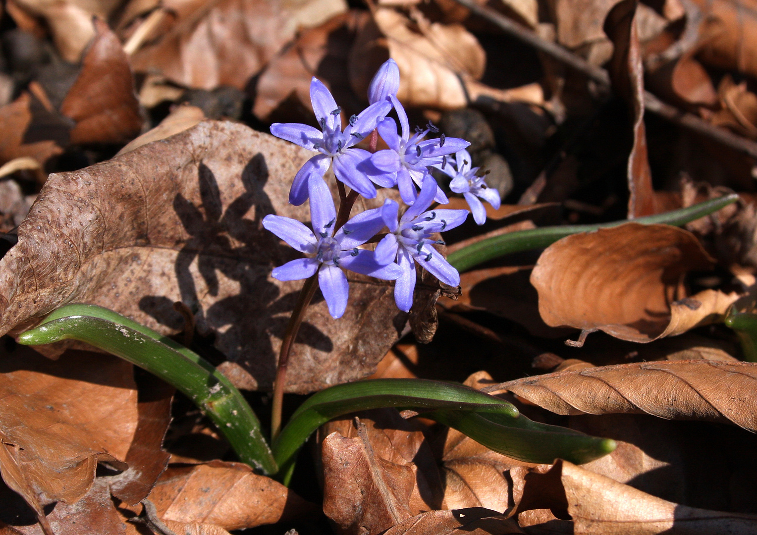 Sehnsucht nach Frühling