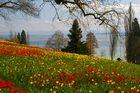 Sehnsucht nach Frühling / II